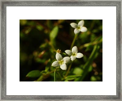 Bluets Framed Print by Billy  Griffis Jr