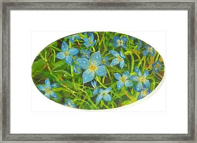 Bluets Of The Shenandoah  Framed Print