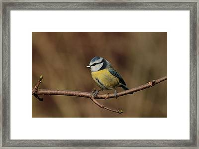 Bluey Framed Print by Peter Skelton