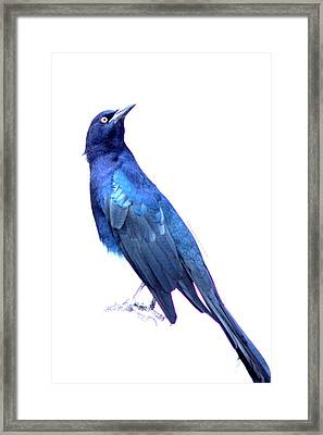 Bluish Bird Framed Print by DerekTXFactor Creative