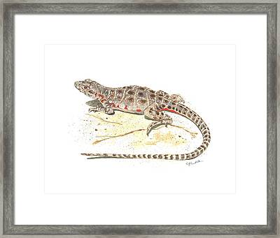 Blunt-nosed Leopard Lizard  Framed Print by Cindy Hitchcock