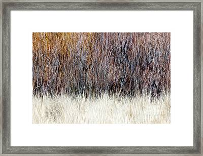 Blurred Brown Winter Woodland Background Framed Print