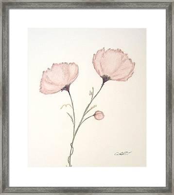 Blush Peonies Framed Print by Christine Corretti