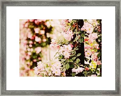 Blush Roses Framed Print by Jessica Jenney