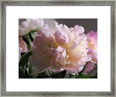 Blushing Peony Framed Print by Rona Black