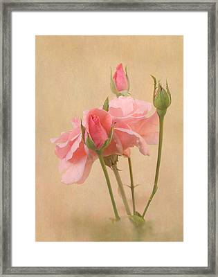 Blushing Pink Framed Print by Angie Vogel
