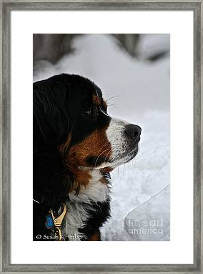 Bmd Profile Framed Print by Susan Herber