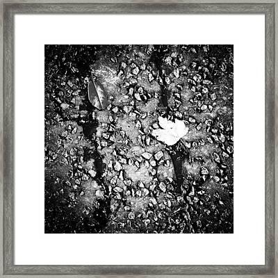 Leaves In The Wet Black 'n' White Framed Print
