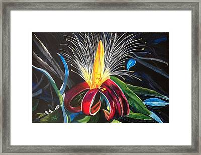 Boab Flower Framed Print