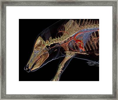 Boar Anatomy Framed Print by Anders Persson, Cmiv