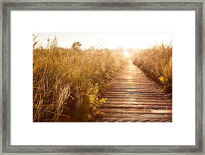 Boardwalk And Morass Grass In Sun Rising  Framed Print