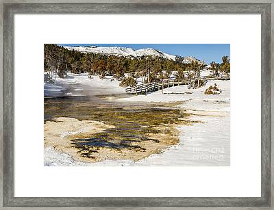 Boardwalk In The Park Framed Print