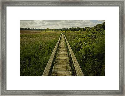 Boardwalk Into Nature Framed Print