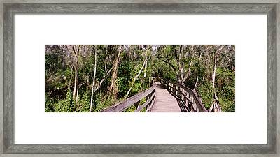 Boardwalk Passing Through A Forest Framed Print by Panoramic Images