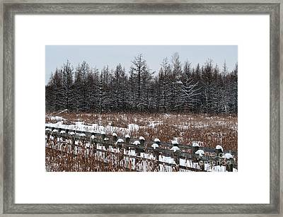 Framed Print featuring the photograph Boardwalk Series No1 by Bianca Nadeau