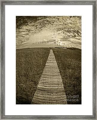 Boardwalk Through The Dunes Framed Print by Edward Fielding