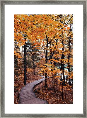 Boardwalk Trail In Autumn Framed Print