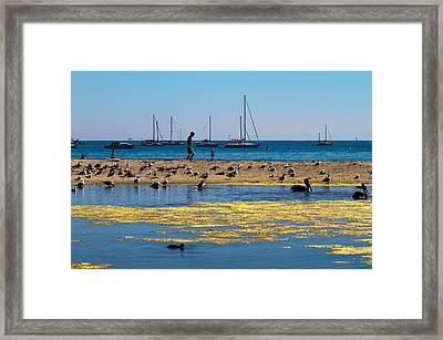 Boats And Birds Framed Print by Bernard  Barcos