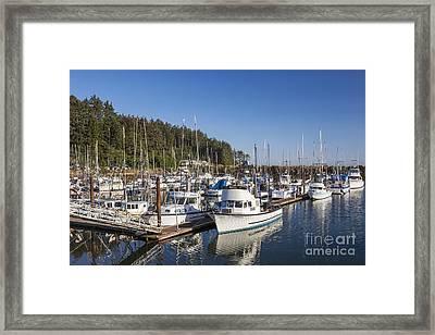 Boats Moored At Charleston Marina Framed Print