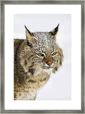 Bob Framed Print by Jack Milchanowski