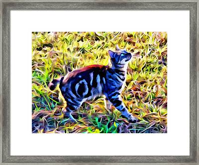 Bobbed Kitty Framed Print by Alice Gipson