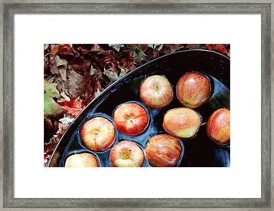 Bobbing For Apples Framed Print by Kim Fearheiley