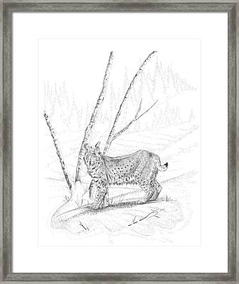 Bobcat Framed Print by Carl Genovese