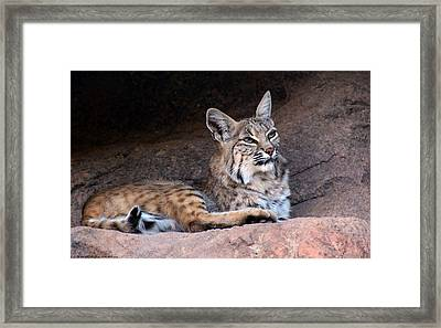 Framed Print featuring the photograph Hmm What To Do by Elaine Malott