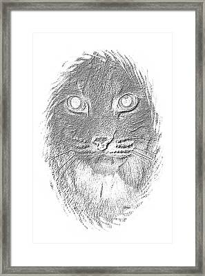Bobcat In Charcoal Framed Print by Maria Urso