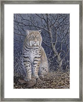 Bobcat Framed Print by Mike Stinnett