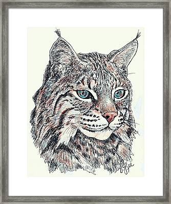 Bobcat Portrait Framed Print by VLee Watson