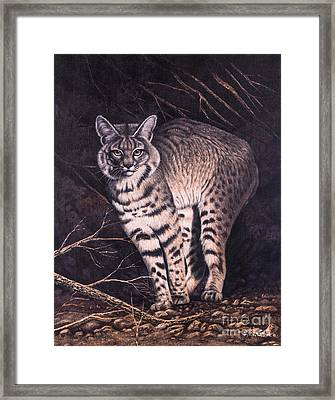 Bobcat Framed Print by Ricardo Chavez-Mendez