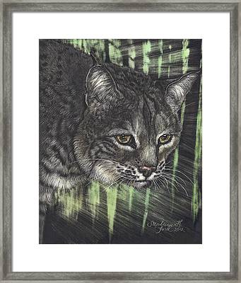 Bobcat Watching Framed Print by Stephanie Ford
