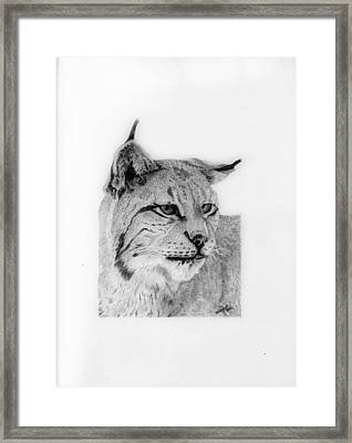 Bobcat Framed Print by Wendy Brunell