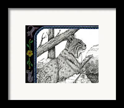 Pen And Ink Bobcats Drawings Framed Prints
