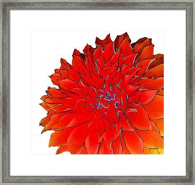 Bob's Flower 2 Framed Print by Cindy Edwards