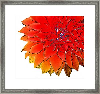 Bob's Flower Framed Print by Cindy Edwards