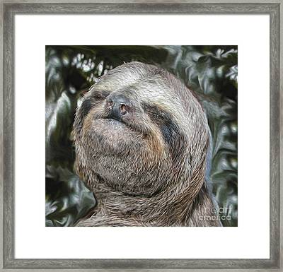 Boca Sloth Framed Print