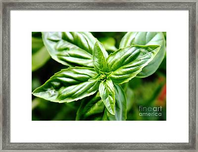 Bodacious Basil Framed Print by French Toast