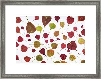 Bodhi Leaf Pattern Framed Print