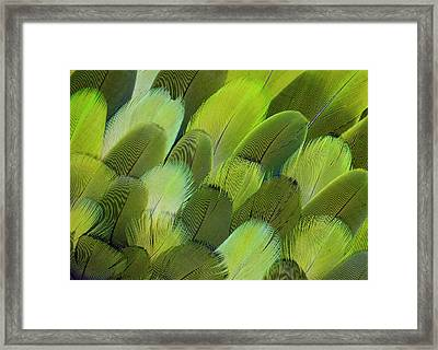 Body Feather Fan Design Of The Amazon Framed Print