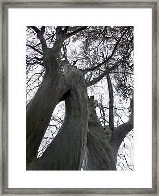 Body Tree Framed Print by Michel Mata