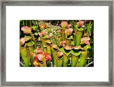Bog Garden 2 Framed Print by Davina Washington