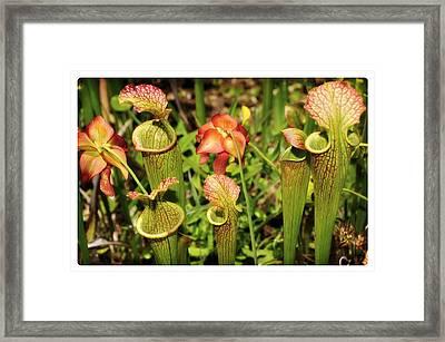 Bog Garden I Framed Print by Davina Washington