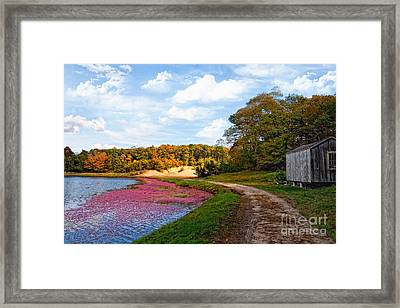 Framed Print featuring the photograph Bog by Gina Cormier