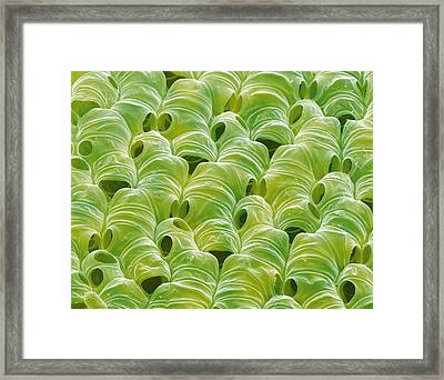 Bog Moss, Sem Framed Print by Power And Syred