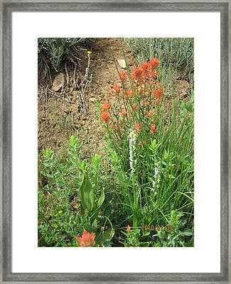 Bog Orchid Red Paintbrush On Mt A Framed Print by Dan A  Barker