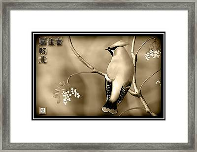 Bohemian Waxwing In Sepia Framed Print by John Wills