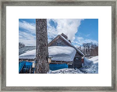 Boiling The Sap Framed Print by Alana Ranney