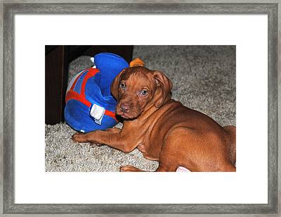 Boise State Fan Framed Print by Jessica Tookey